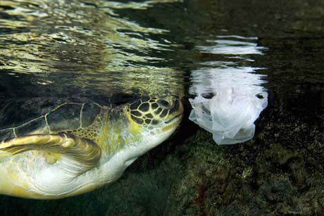 turtle-with-plastic-bag
